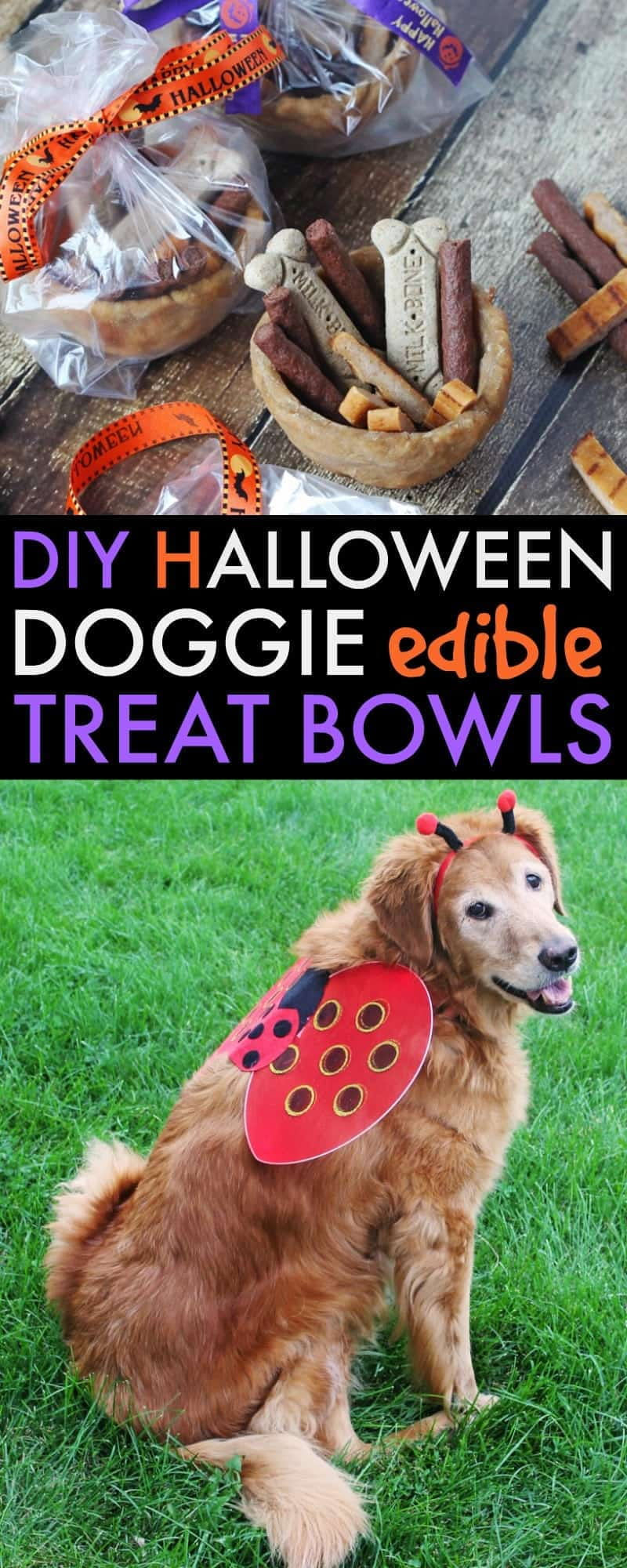 DIY Halloween Doggie Edible Treat Bowls. Fill these homemade bowls with fun dog-safe treats for your furry neighbors this Halloween. They are easy to make and are sure to make tails wag!