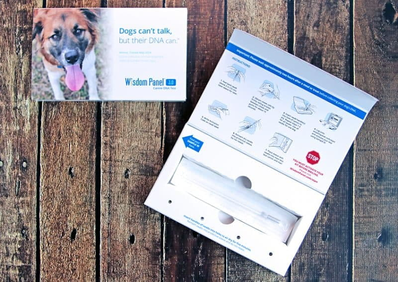 What's Your Dog Made Of? Find Out With Wisdom Panel 3.0 Canine DNA Test. A simple swab is all it takes!