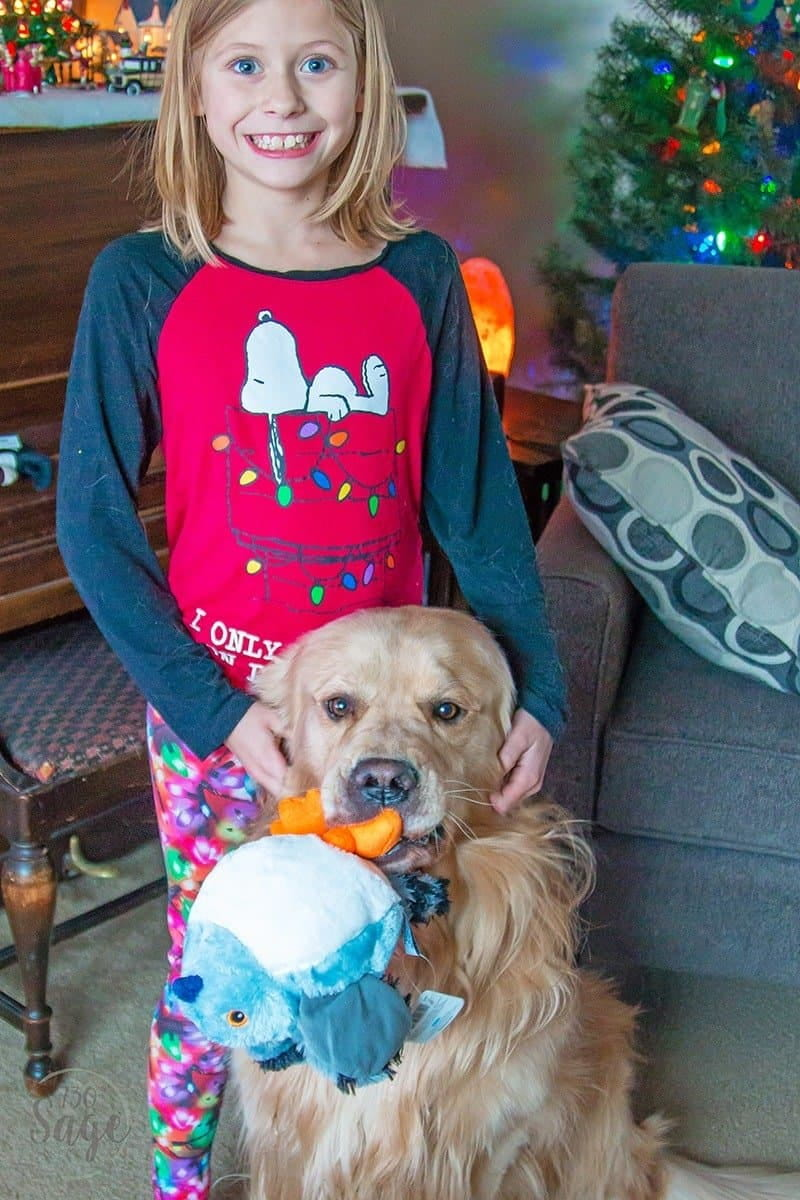Girl standing behind a golden retriever with a toy in his mouth